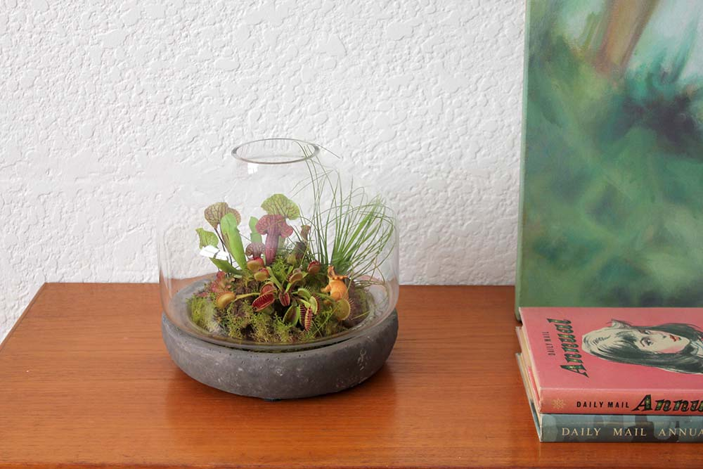 how to catch flies alive for my venus fly trap