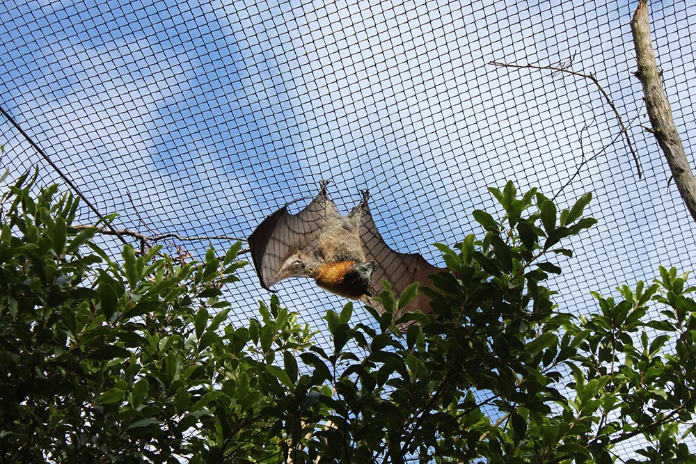 14_Healesville cherryandme.com